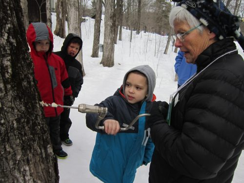 Students learn about maple sugaring small